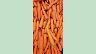 Carottes oranges lavées